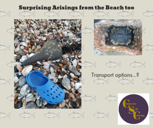 Surprising Arisings from the Beach! (2)